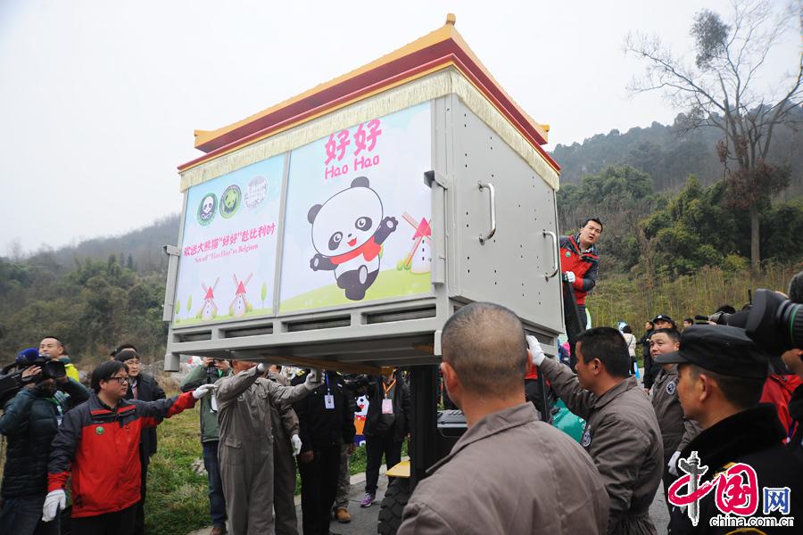 """2月22日中午,中国保护大熊猫研究中心两只大熊猫""""星徽""""、""""好好""""正式从都江堰基地出发,启程前往比利时,参与为期15年的大熊猫科研合作与交流项目。"""