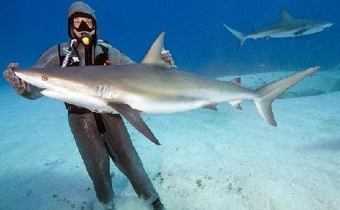 巴哈马:视频遭倒立催眠在水中梳妆台鲨鱼图片