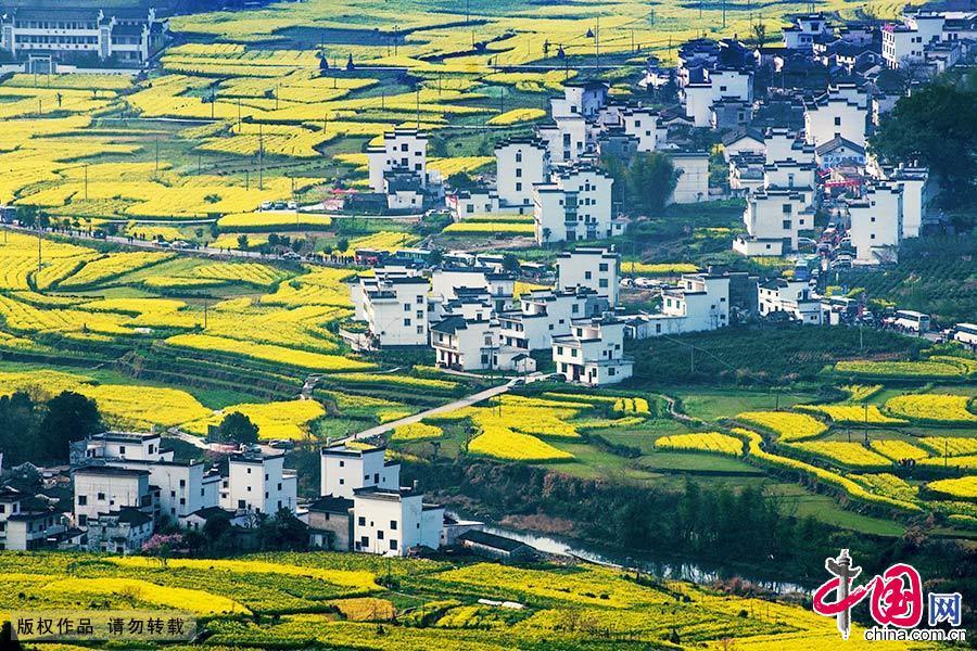 油菜花、桃花、徽派民居交相辉映,构成一幅幅美丽的乡村画卷。