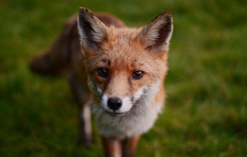 【环球网综合报道】据英国《每日邮报》4月3日报道,近日英国哺乳动物协会举办哺乳动物摄影大赛,来自英国各地的摄影师奉上自己的优秀作品,让观众们领略了动物们可爱的一面。其中,一只后腿站立的棕色野兔拔得头筹,为该摄影师赢得桂冠。 夺冠的摄影师是来自苏格兰的斯图尔特斯科,据他透露,他在苏格兰边陲的一处田野中发现这只棕色野兔,当时它后腿直立欲奔跑,斯科特便抓拍到了它奔跑前的精彩瞬间。大赛评委给出了这样的获奖理由:过去50年,由于农业耕作发生了很大改变,人们很难在田野中寻觅到野兔的踪迹,该照片为大家呈现了罕见的