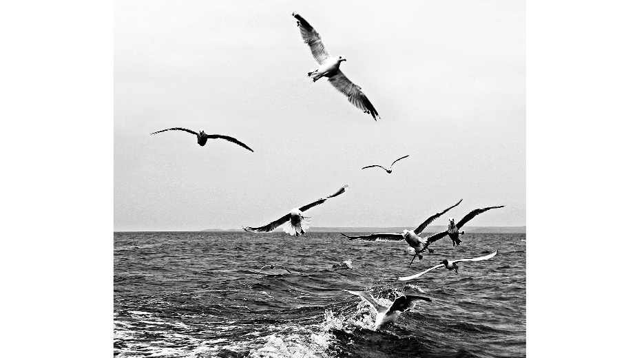 霸气动物图片黑白