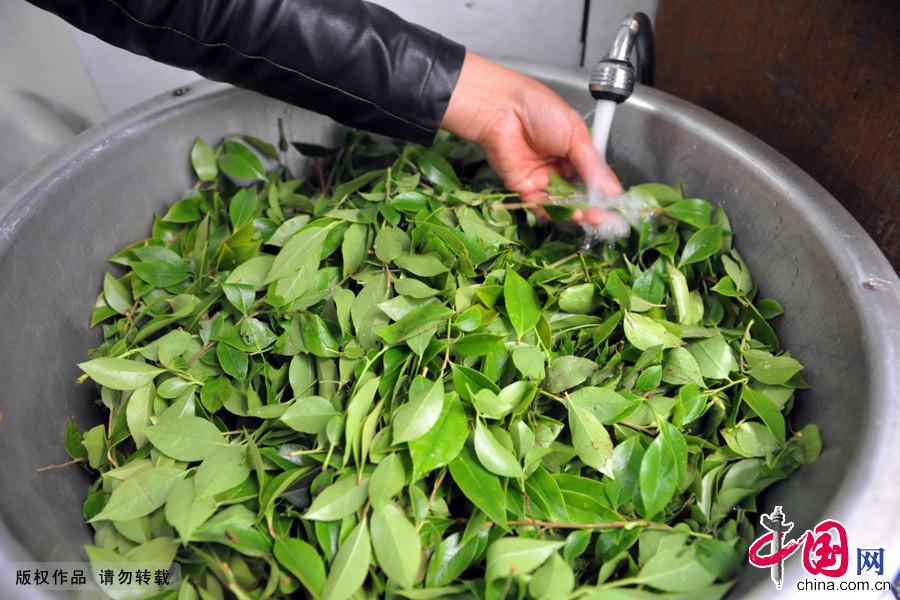 """浙江省流传着立夏时节吃""""乌米饭""""的习俗。"""