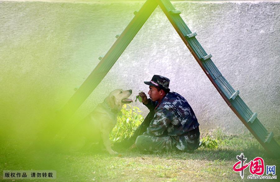 """在江蘇省南京市郊外,有一對對特殊的""""戰友""""。""""戰友""""們一起生活、訓練、執行任務,為部隊多次立下汗馬功勞,""""他們""""就是武警江蘇總隊一支隊警犬分隊的訓犬員和警犬。"""