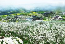 广元坚持生态立市