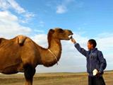 叶尔江切了自己吃的茄子喂骆驼