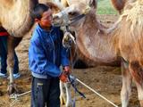 小骆驼有时候会亲亲叶尔江的脸