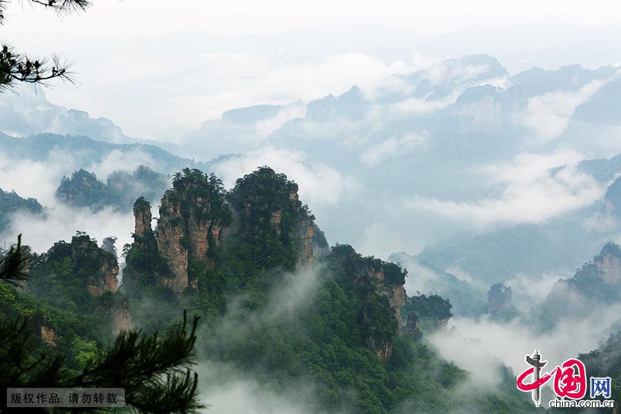 5月14日,湖南张家界天子山风景区雨后放晴,奇异山峰云雾缭绕,峰墙、峰林宛若仙境。