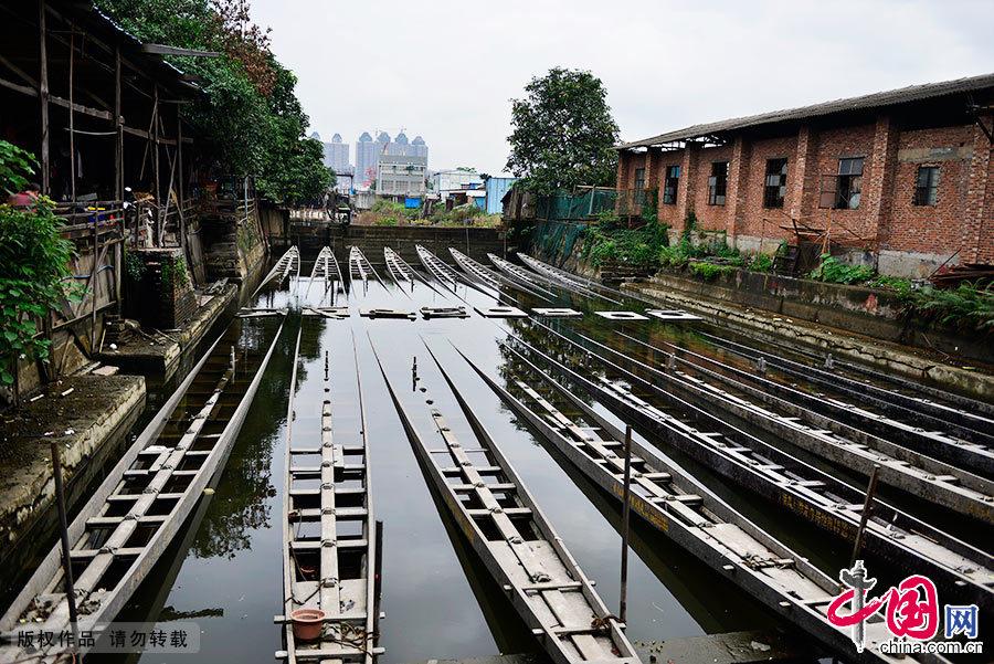 随着端午节的临近,广州最古老的龙舟制作基地——番禺上漖村龙舟制造厂内木屑飞扬。