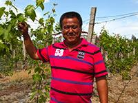 莫乎尔牧场的种葡萄 促发展