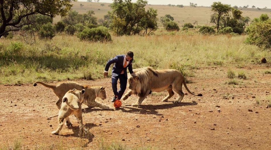 南非动物管理员与狮子踢足球呼吁保护动物_ 视频中国