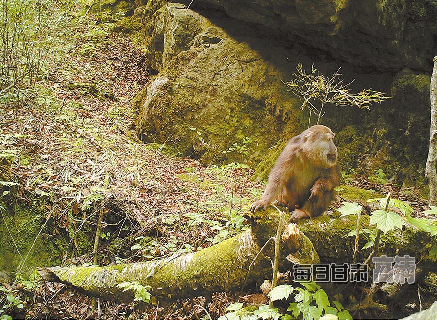 甘肃白水江自然保护区:红外相机下的珍稀野生动物[组图]