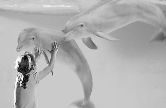 一个小女孩摇摇摆摆地走进水族馆,她在看到海豚后张大了嘴巴.图片