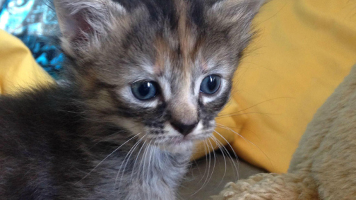 表情无比a表情一只小猫走红图片吐血表情c++包包网路表情图片