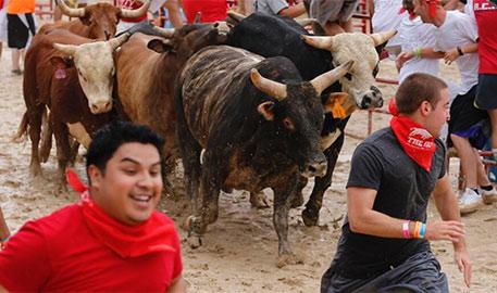 芝加哥山寨奔牛活动 场面惊险刺激