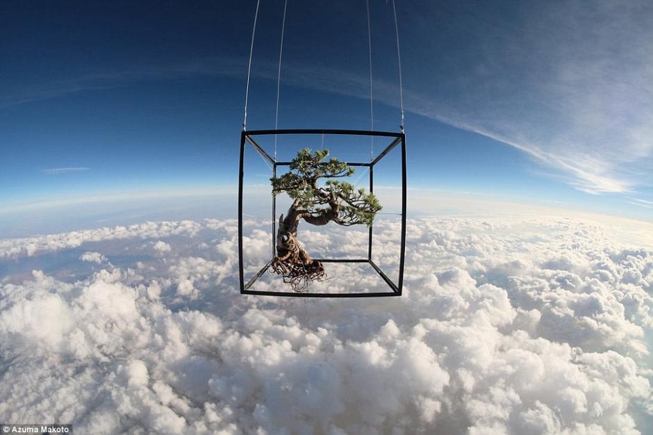 据《每日邮报》7月22日报道,日本艺术家Azuma Makato用氦气球欲将盆栽和插花送上太空,并在气球爆裂之前,用一同上天的照相机拍下那一瞬间美丽的画面。