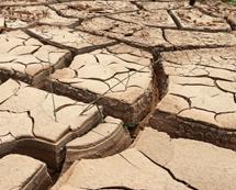 河南汛期大旱 河床干裂[组图]