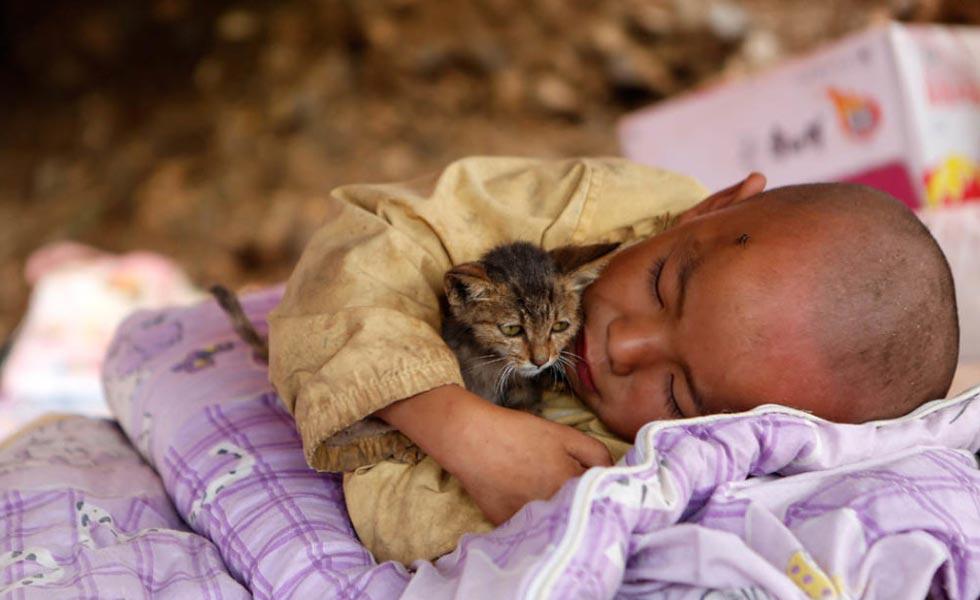 震区小孩抱小猫休息