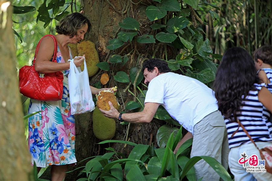 熱活巴西(十八)裏約植物園,一花一園一世界