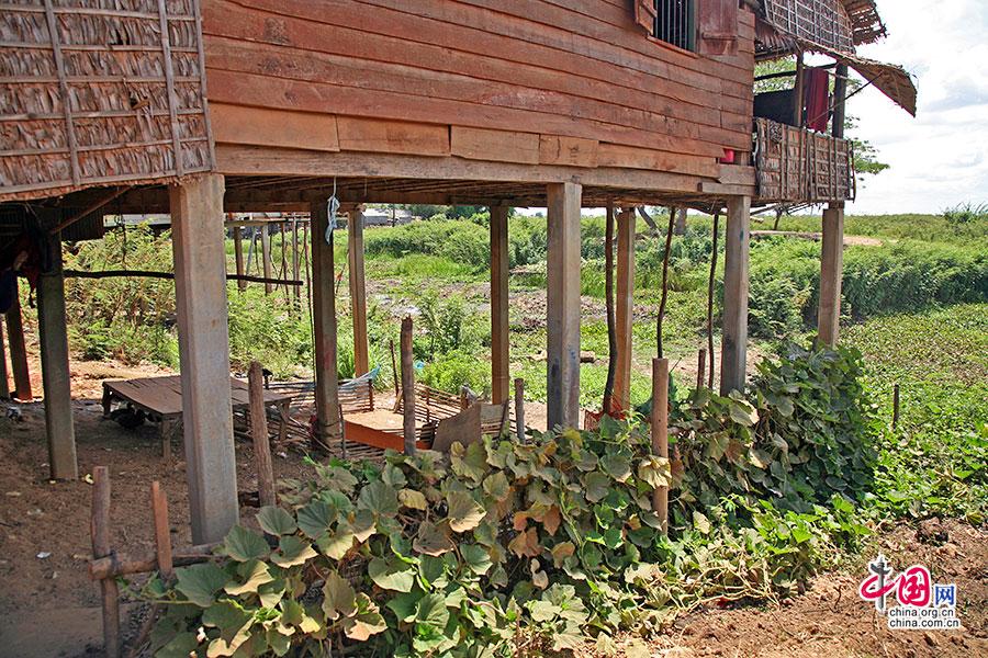 瓜果蔬菜也爬滿吊腳屋之下