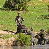 南非:冒死营救小象全程