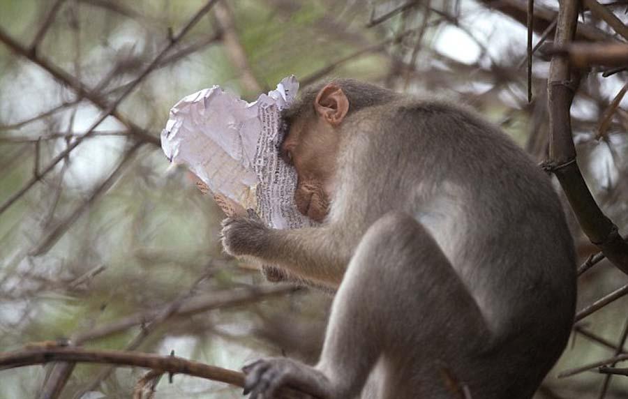 印度猕猴看'研读'股市行情表情震惊[组图]