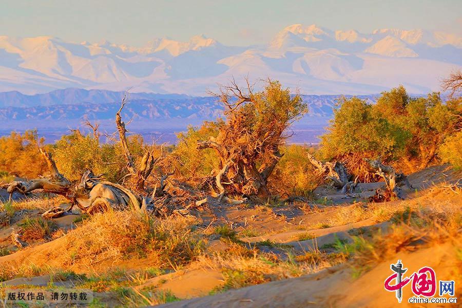 新疆有很多胡杨林,伊吾胡杨林最为奇特。