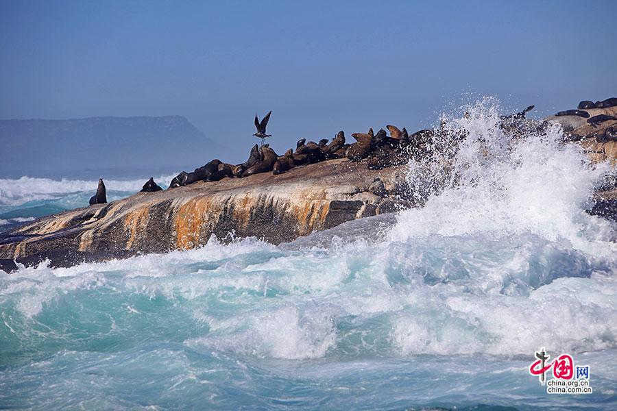 绚色南非(十四)海狮岛,生命的怡然自得