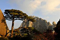 全球最佳赏秋胜地攻略:黄山的秋色诱惑
