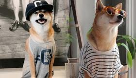 月入九万的狗走红 网友:活得还不如只狗