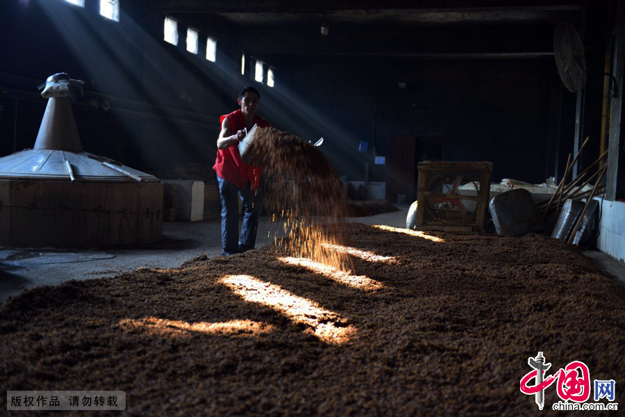 制酒车间,工人在反晾发酵原料。中国网图片库 周会/摄