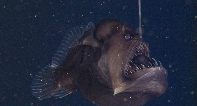 研究人员,安康鱼,怪鱼,魔鬼,拍摄