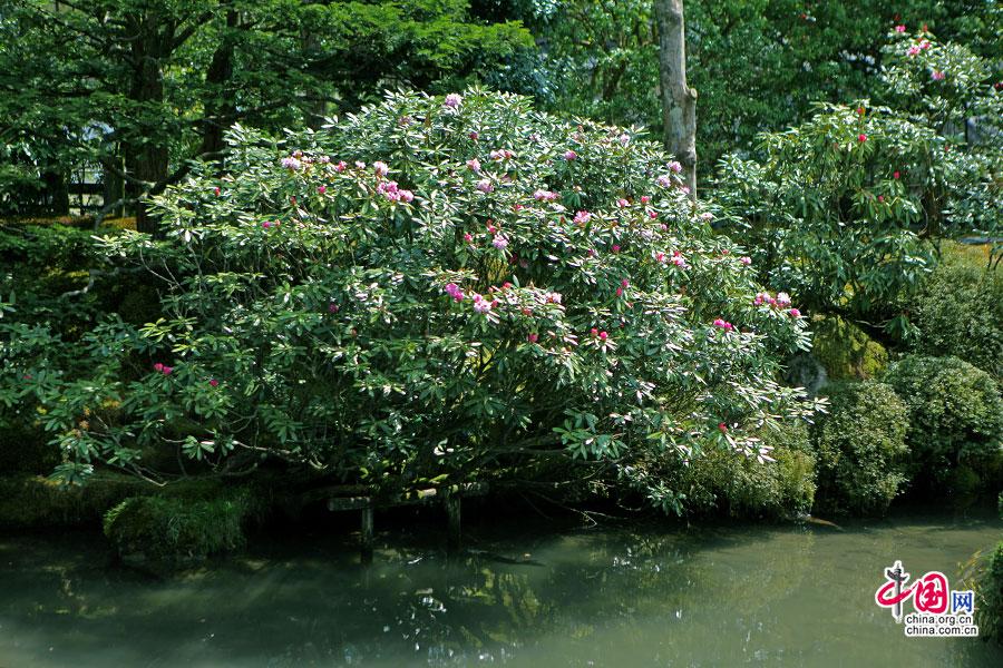 水边花物园林景观素材
