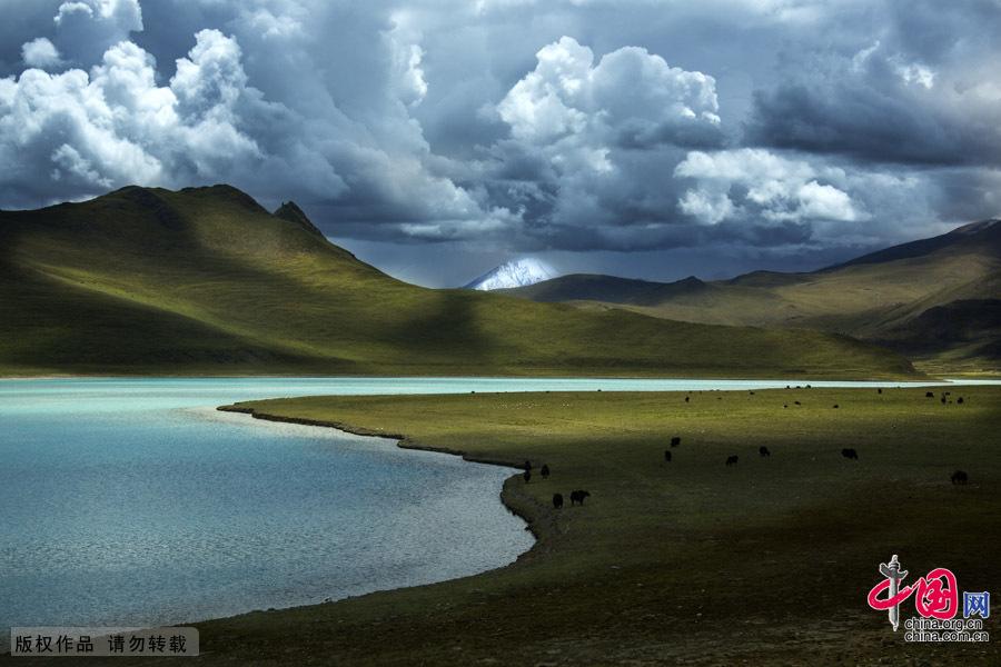 穿越青藏高原阿里大北线 生物灵动[组图]
