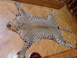 英皇室猎物房照片曝光 威廉遭批言行不一