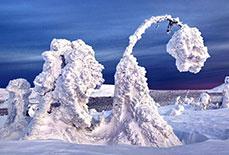 俄罗斯极寒地带树木被冰雪覆盖亦妖亦仙
