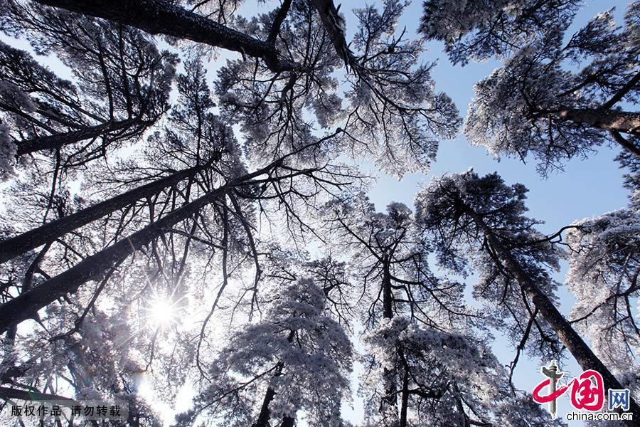 1月7日,黄山风景区雨止放晴,出现了大面积的壮观雾凇景观。到处银装素裹,玉树琼枝,美不胜收。中国网图片库 施广德/摄