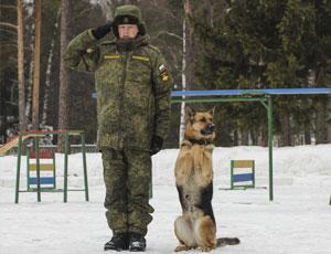 俄羅斯軍犬訓練前敬禮賣萌