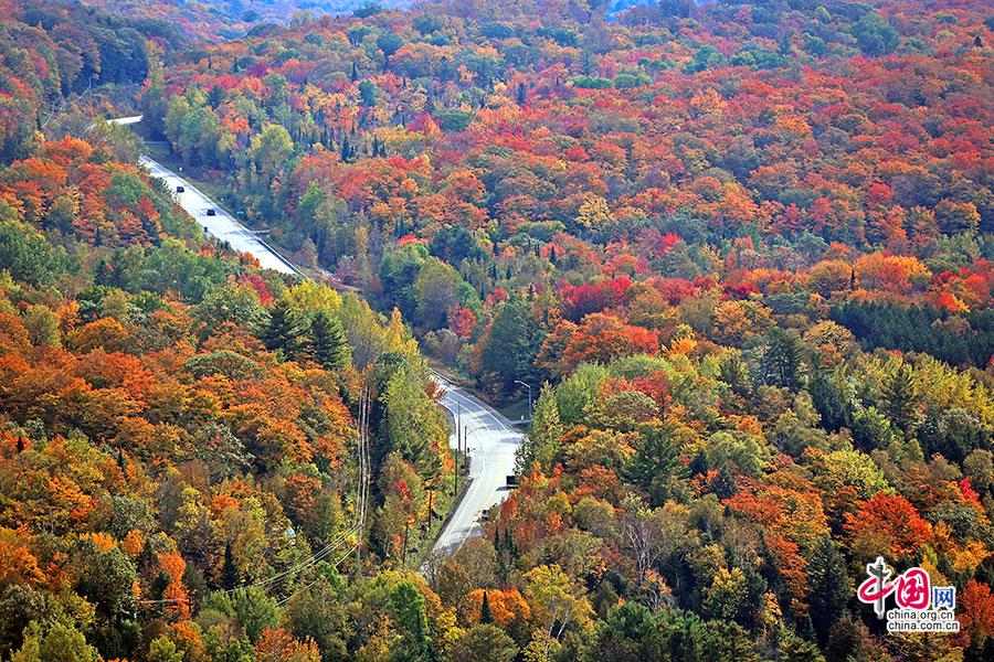 秋色加浓(十一)狮子台的层林秋色