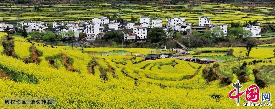 3月21日,江西省婺源县江岭,十万亩油菜花竞相开放,整个村庄黄灿灿一片,呈现出一幅花的海洋的醉人画面。