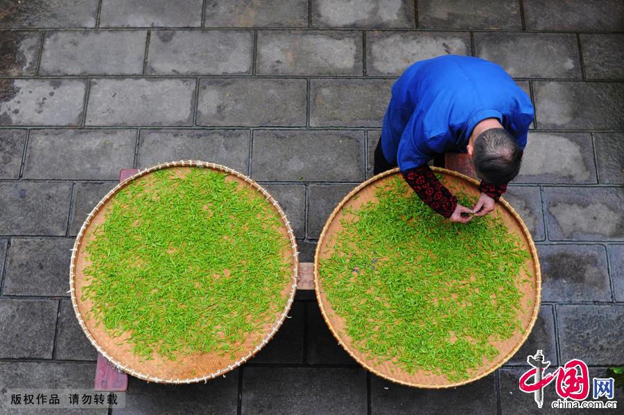 在龙门坎村里,70多岁的葛老已经干了一辈子的茶农。葛老说,自己的家族因茶而兴,事茶而盛,明清年间,祖辈们曾在江浙沪开茶行,男人们皆以茶为道,静心伺候千年名茶,坚守祖辈手工炒茶古艺。