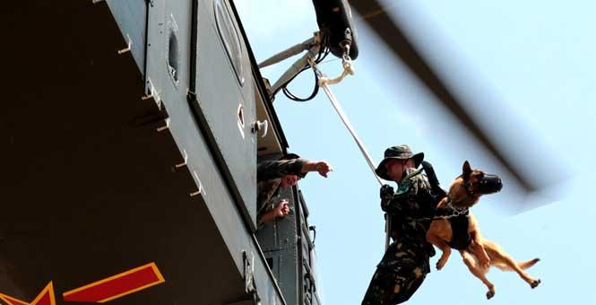 解放軍首次進行軍犬機降訓練 特戰神犬從天而降
