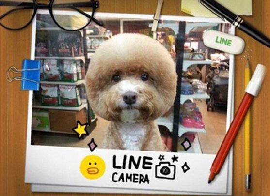 萌萌哒!方脸、长发引领宠物狗发型发带流_v长发新潮发型圆脸图片