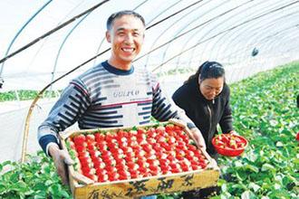 """草莓种植一定要""""打药""""吗?"""