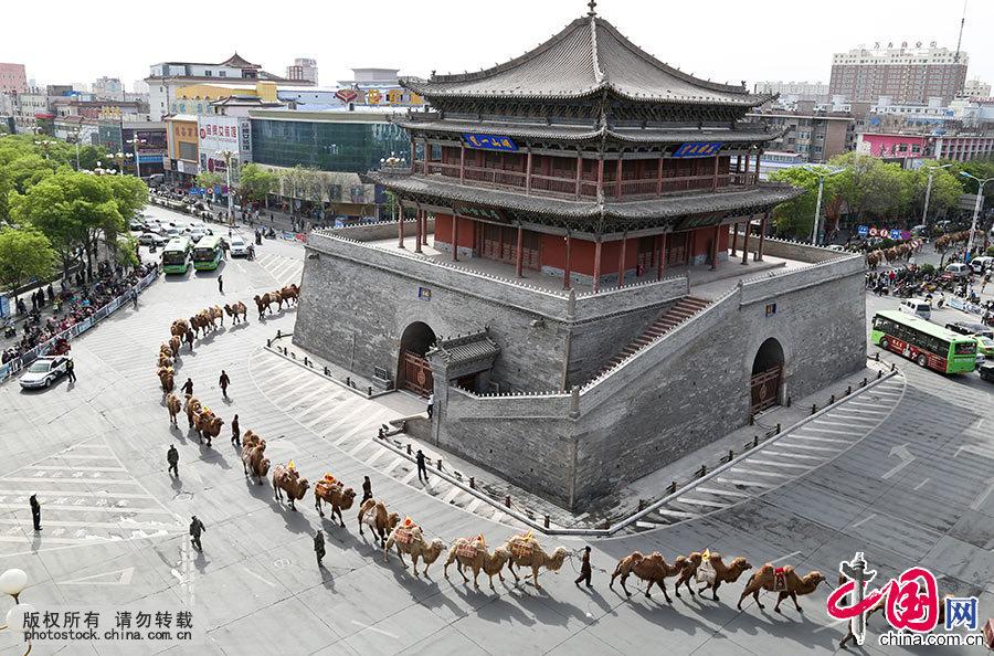 """5月5日,一队由136峰骆驼组成的茶商驼队从甘肃张掖钟鼓楼前走过。驼队由136只高大威猛的""""沙漠之舟""""骆驼、8辆古香古色的马车、数十辆宣传车、100余位丝路英雄组成。中国网图片库 王将/摄"""