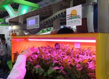 高科技小菜园亮相2015北京科博会