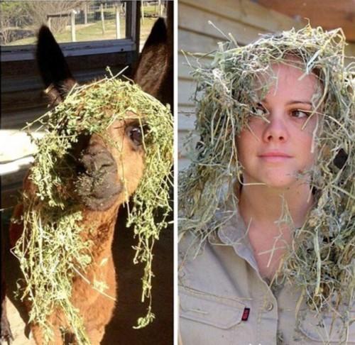 澳大利亚管理员模仿动物搞笑照片蹿红网络