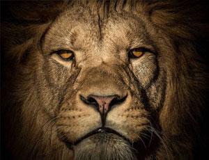 暗光拍摄独特动物肖像
