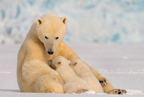 教小孩识动物图片