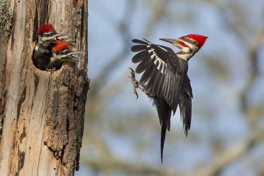 美国奥杜邦鸟类协会2015摄影大赛获奖作品[组图]