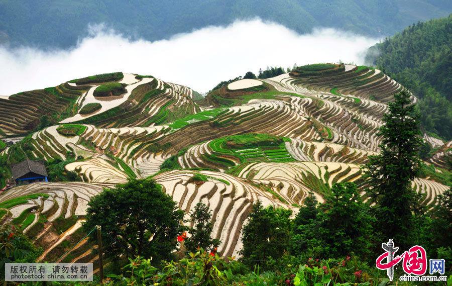 龙脊梯田从山脚盘绕到山顶,小山如螺,大山似塔,层层叠叠,高低错落。中国网图片库 乔晓春 摄